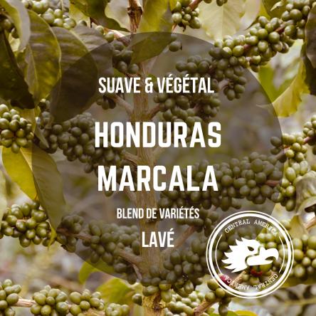 Honduras - Marcala | Les Cafés Félix : Artisan-Torréfacteur