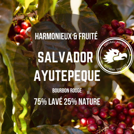 Café Salvador – Ayutepeque – Arabica nature & lavé