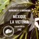 Le Mexique – Décaféiné